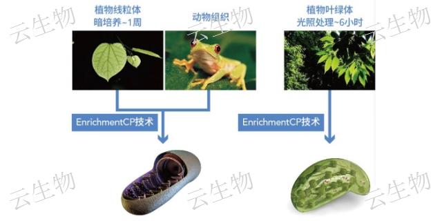 北京小基因组完成图小基因组测序价格,小基因组测序