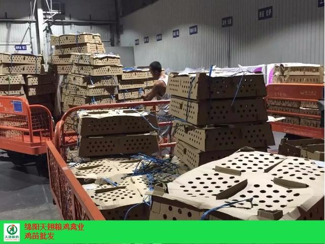 東興區雞苗廠家 歡迎咨詢「綿陽天翅糧雞農業科技供應」