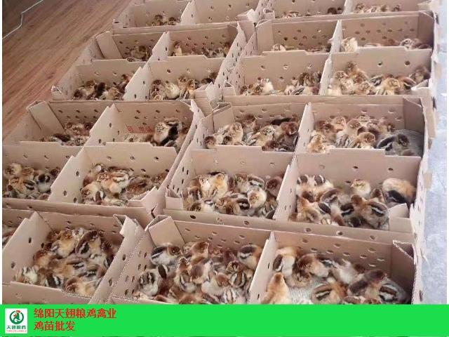 羅江雞苗養殖廠家 合作養殖「綿陽天翅糧雞農業科技供應」
