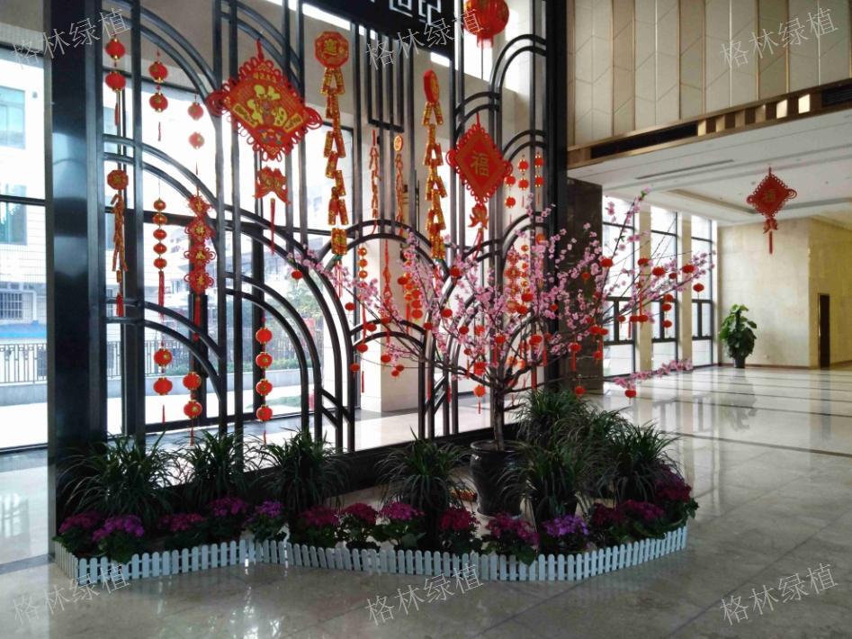 路桥办公室植物租摆价格 服务为先「台州天之江生态科技供应」