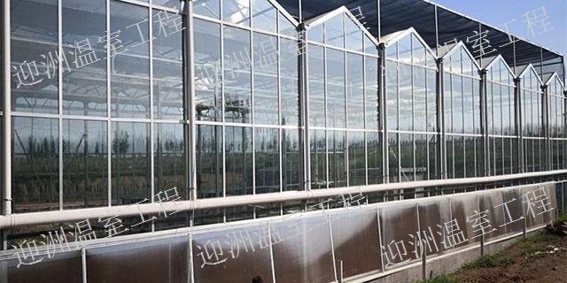 江苏价格低的智能玻璃大棚承接 诚信服务「青州市迎洲温室工程供应」