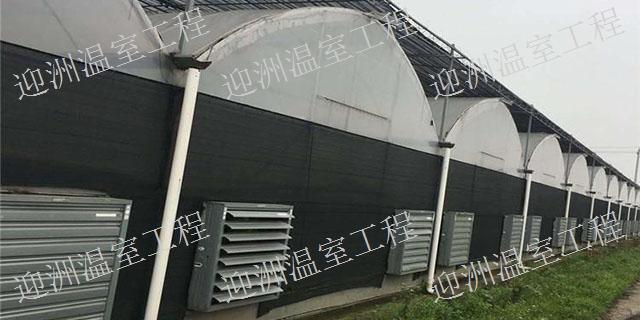 广西价格低的日光温室多少钱一平方 诚信为本「青州市迎洲温室工程供应」