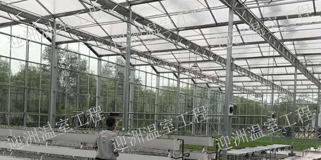 四川建造日光温室工程大棚 值得信赖「青州市迎洲温室工程供应」