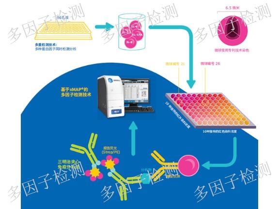 苏州Milliplex蛋白多因子检测联系人 来电咨询「益启供」