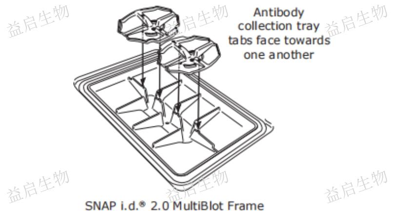徐汇区加速可回收抗体WB实验加速器咨询报价,WB实验加速器