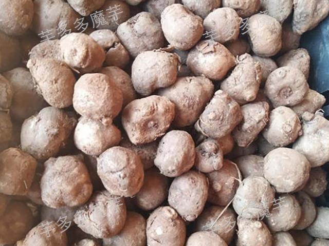 曲靖一代魔芋种子销售,魔芋种子