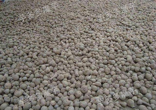 四川脱毒魔芋种子批发采购 欢迎咨询 云南芋多多魔芋种子供应