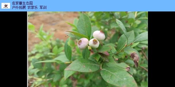 江西户外垂钓活动策划 有口皆碑 江西佐家寨生态农业发展供应