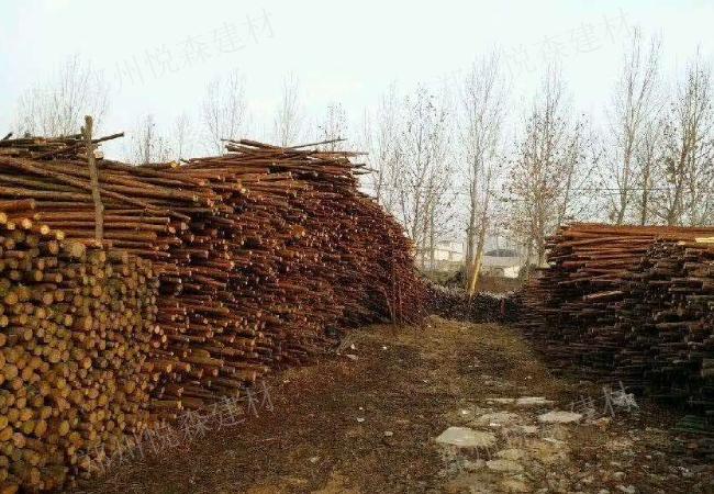 广东清水模板零售 厂家直销  郑州市悦森建材供应